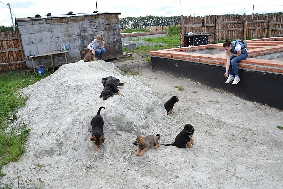 В знойную жару Пэпси и щенки спасались под гаражом и на куче с песком